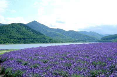 かなやま湖畔鹿越園地
