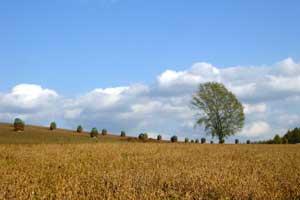 哲学の木と豆ニオ